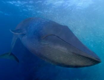 Вот письмо, в котором говорится: «Дорогие люди, ставлю 10 баксов, что вы мне кита не пришлёте. Элиот Гэнон (6 лет)».
