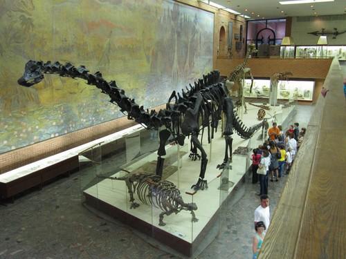 Скелет крупного динозавра. Музей динозавров. Москва